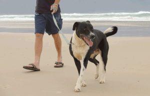 Os homens sabem que o cachorro ajuda na conquista. (Foto: Reprodução / Google)