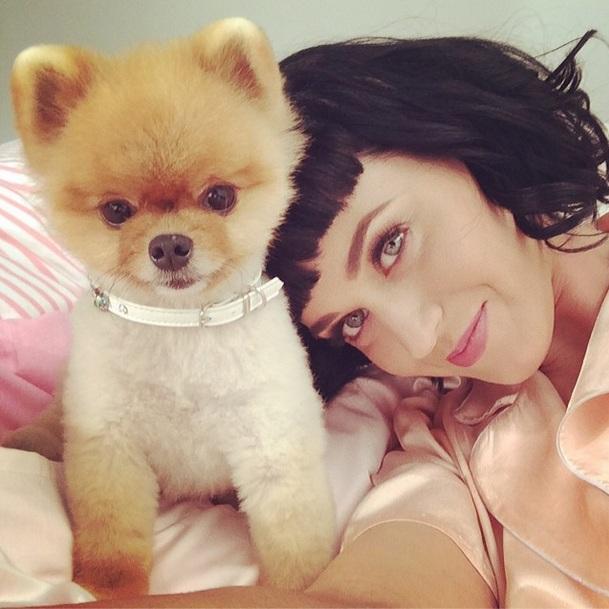 Katy Perry com a celebridade canina, Jiff. (Foto: Reprodução / Instagram)
