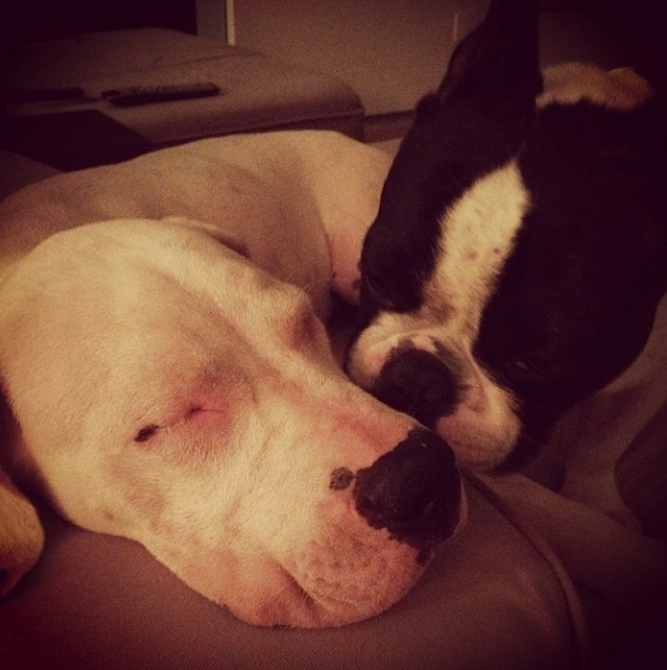 Lola e Tarantino dormindo juntos. (Foto: Reprodução / Instagram)
