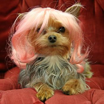 Peruca rosa deixando a cachorrinha mais charmosa. (Foto: Divulgação / Wiggles Dog Wigs)