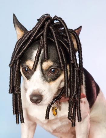 Dreadlocks. (Foto: Divulgação / Wiggles Dog Wigs)
