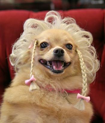 Wiggles Pet Wigs 88