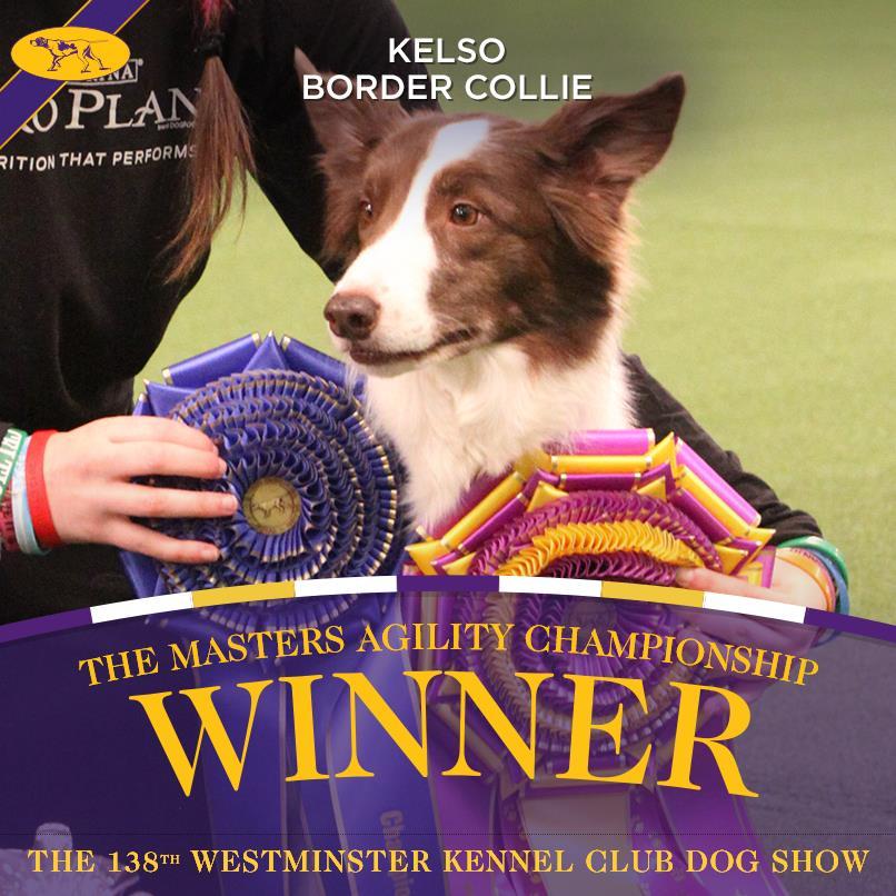 Kelso, vendedor do campeonato de Agility do Westminster Kennel Club Dog Show. Foto: Reprodução/Facebook