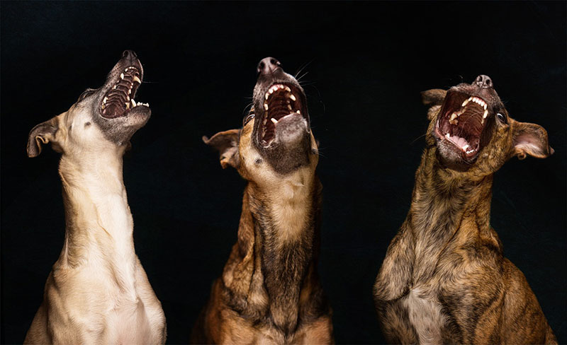Elke-Vogelsang-fotografia-cachorros-01