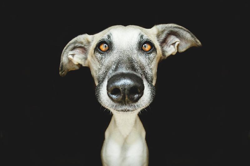 Elke-Vogelsang-fotografia-cachorros-05