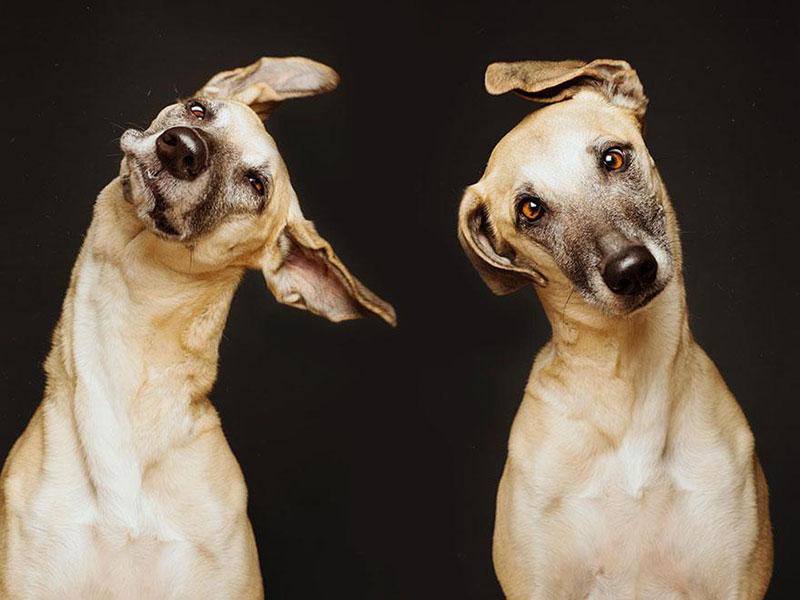 Elke-Vogelsang-fotografia-cachorros-08