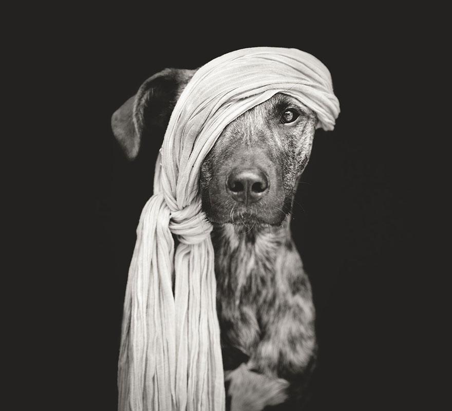 Elke-Vogelsang-fotografia-cachorros-12