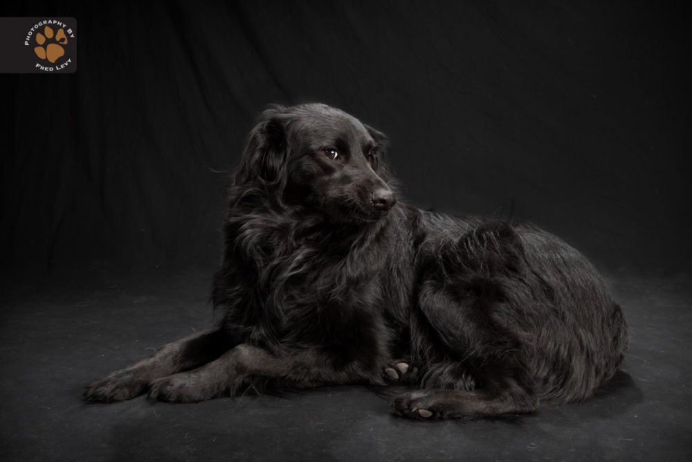 Fred-Levy-fotografia-cachorros-pelagem-preta-02