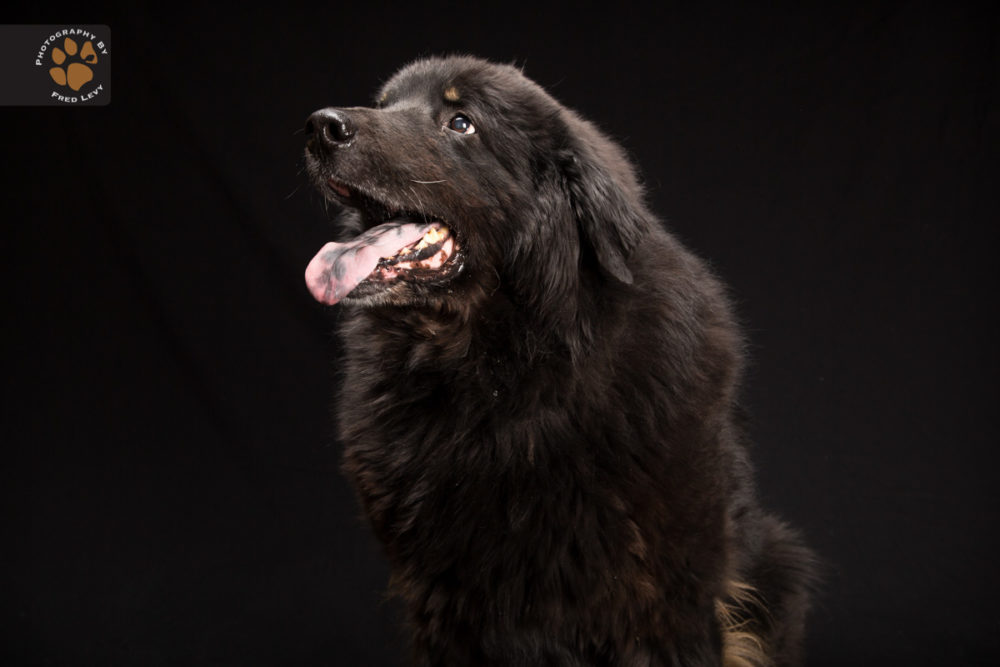 Fred-Levy-fotografia-cachorros-pelagem-preta-03