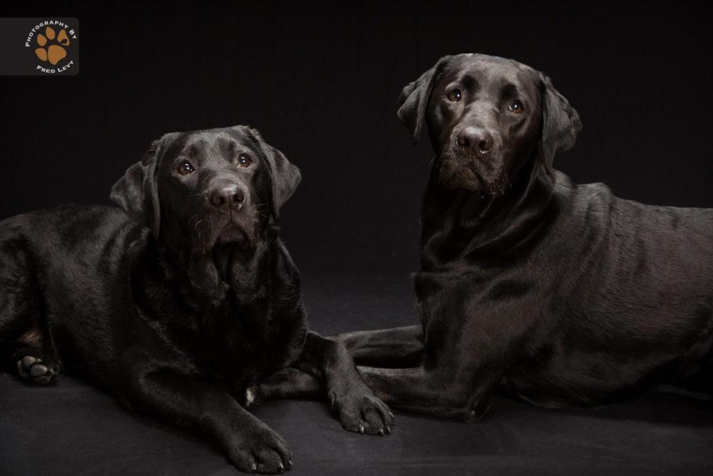 Fred-Levy-fotografia-cachorros-pelagem-preta-04