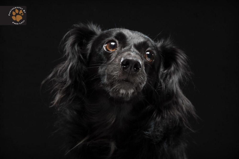 Fred-Levy-fotografia-cachorros-pelagem-preta-07