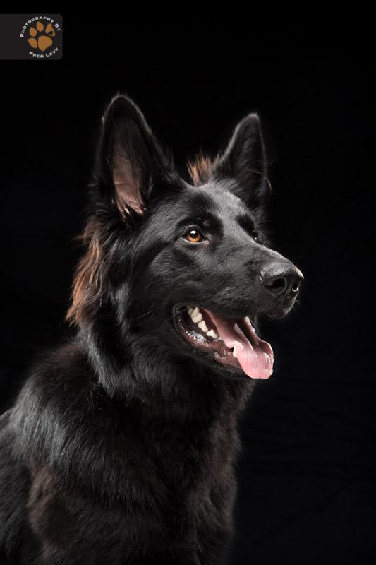 Fred-Levy-fotografia-cachorros-pelagem-preta-08