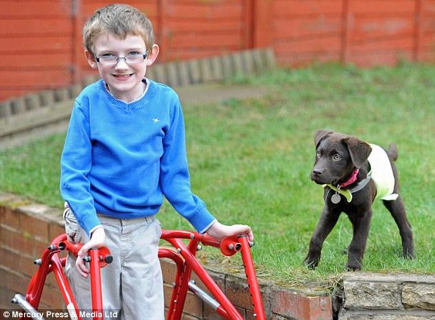 A cachorrinha está ajudando Ben nas tarefas do dia-a-dia. (Foto: Reprodução / Daily Mail)