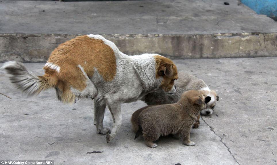 A cachorra tem muito carinho com seus filhotes. (Foto: Reprodução / Daily Mail)