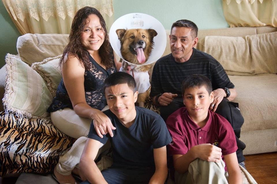 A cachorra Charlie defendeu a família dos ladrões. (Foto: Reprodução / Facebook)