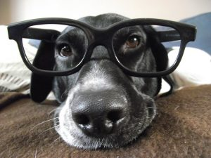 Cachorros enxergam coisas que são invisíveis para os humanos. (Foto: Reprodução / Google)