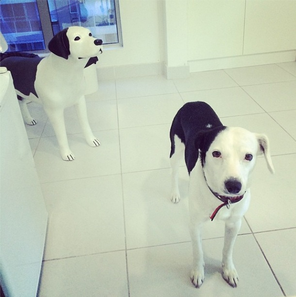 Cachorro Pluft e sua estátua. (Foto: Reprodução / Instagram)