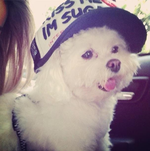 Cachorro Puff de Luan Santana. (Foto: Reprodução / Instagram)