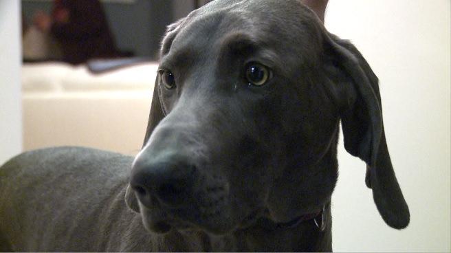 O cachorro Liberty acordou seu tutor durante incêndio. (Foto: Reprodução / WPRI)