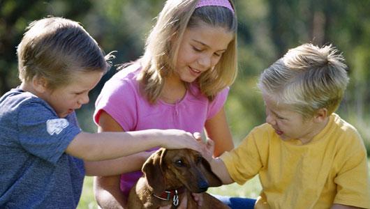 Cãozinho surdo ganha um lar ao lado de crianças também surdas. Foto: Reprodução / AnimalNova