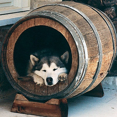 cama-cachorro-barril-vinho
