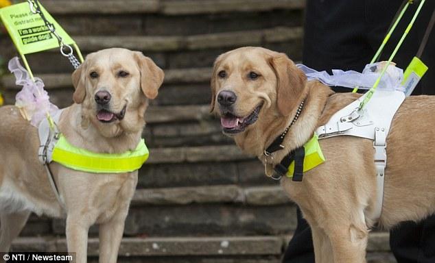 E os cães-guia levaram as alianças. (Foto: Reprodução / Daily Mail)