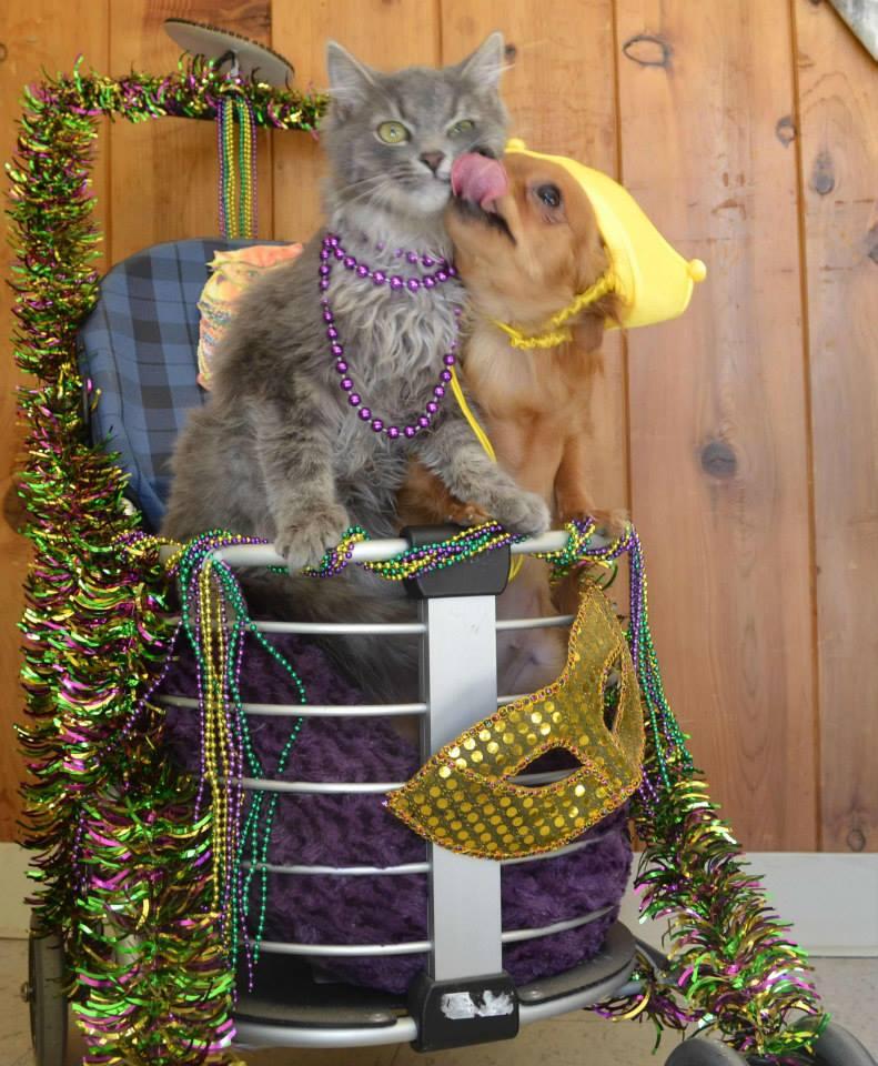 A dupla não se desgruda e já participou até de festa a fantasia no Centro Animal. (Foto: Reprodução / Facebook / Helen Woodward Animal Center)