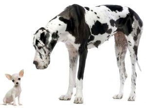Cachorros pequenos costumam ser mais desobedientes. (Foto: Reprodução / Google)