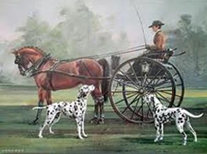 """""""Cães de carruagem"""". Foto: Reprodução"""