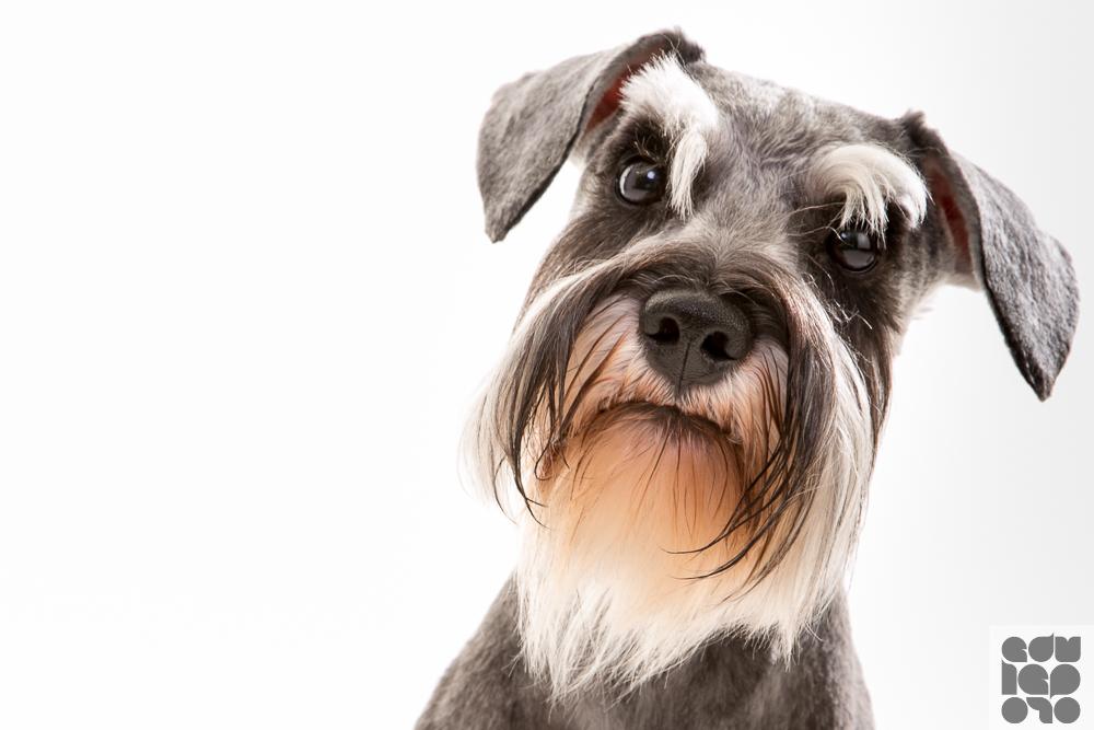 edu-leporo-fotografias-cachorros (1)