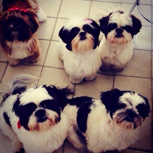 Os cinco cães de Giovanna Lancellotti. (Foto: Reprodução / Instagram)