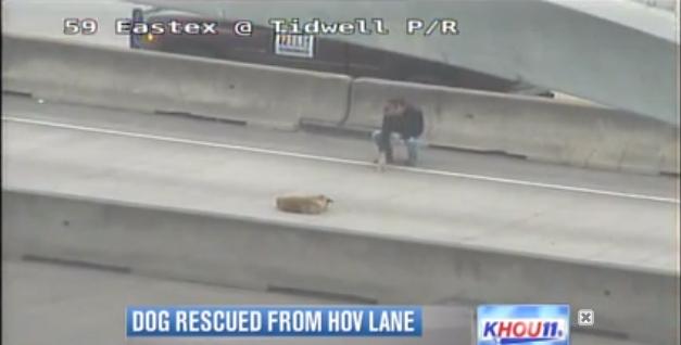 Graças ao ato heroico de Rickey, a cachorra passa bem. Foto: Reprodução / Youtube
