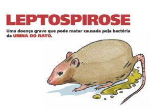 Leptospirose em cães. Foto: Reprodução