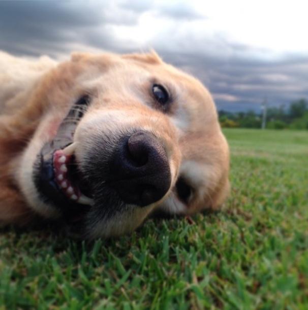 A cachorra Matilda é do sogro de Marcos Mion. (Foto: Reprodução / Instagram)