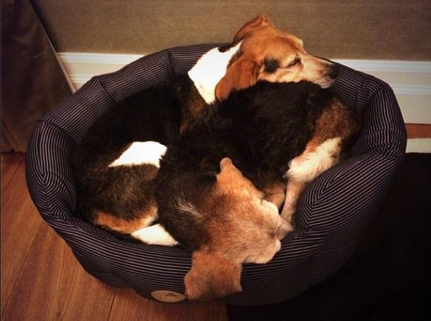 Cachorros de Mark Hoppus dormindo juntinhos. (Foto: Reprodução / Instagram)
