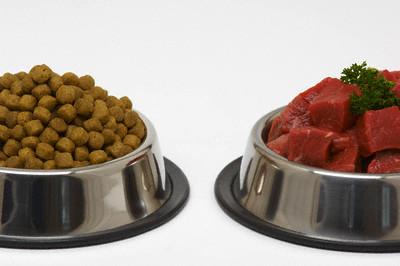 Alimentação saudável para cães. Foto: Reprodução
