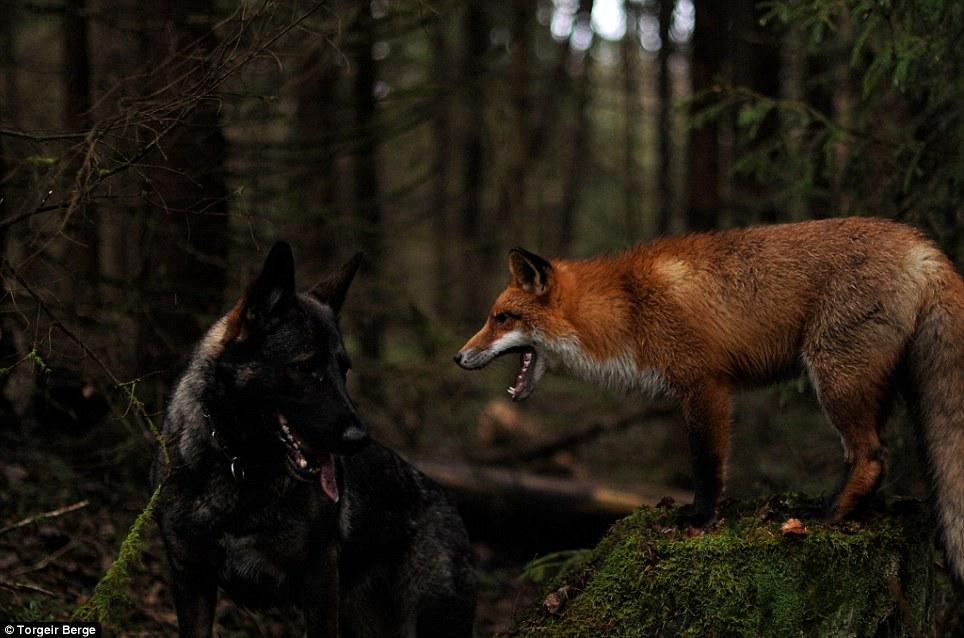 raposa-cachorro-livro-amizade-01