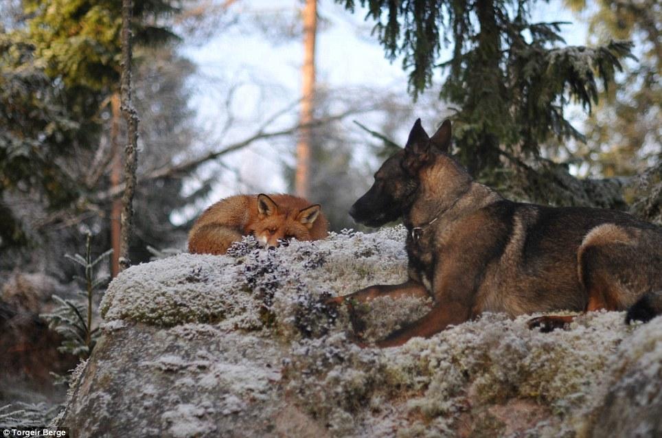 raposa-cachorro-livro-amizade-04