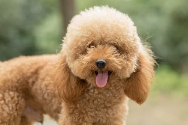 cachorros que adoram o calor