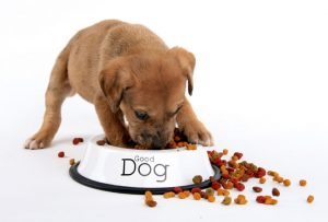 Tudo sobre ração para cachorros. Foto: Reprodução