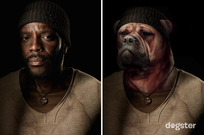 Tyreese como um Bulmastife. (Foto: Reprodução / Nigel Sussman / Dogster)