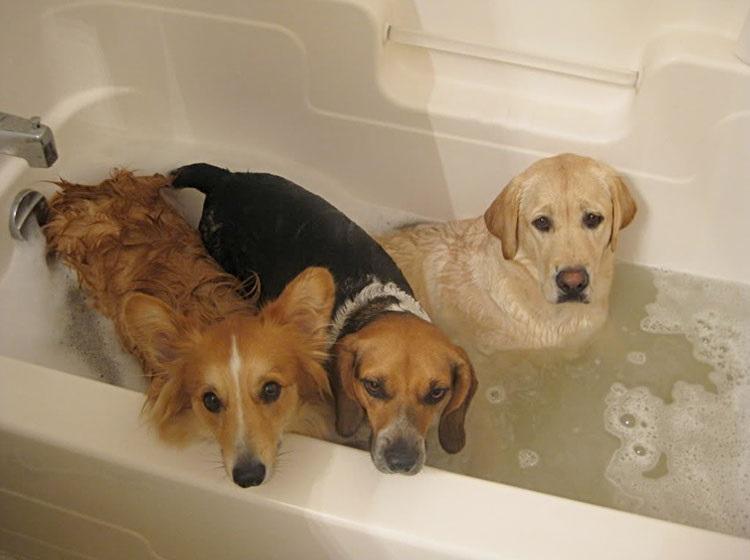 alegria-hora-banho