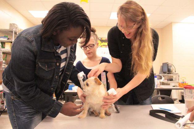 Alunos com a cachorra Lila, trabalhando no projeto da cadeira de rodas. (Foto: Reprodução / SFGate)