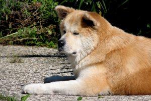 Asilo para cães no Japão. Foto: Reprodução