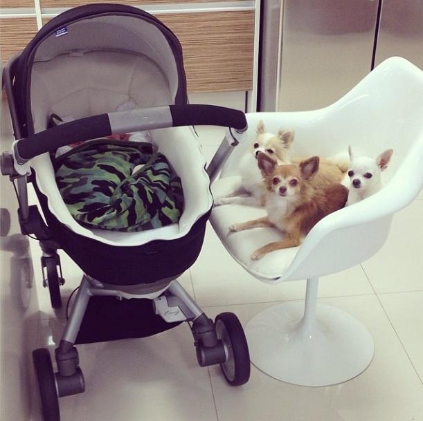 Filho de Ana Hickmann ao lado de seus cães. (Foto: Reprodução / Instagram)