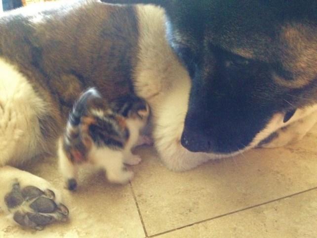 A cadela e a gatinha não se desgrudam. (Foto: Reprodução / KItty Army)