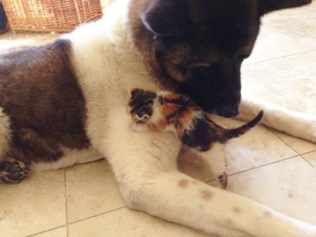 A cadela Lily salvou e adotou a gatinha. (Foto: Reprodução / KItty Army)