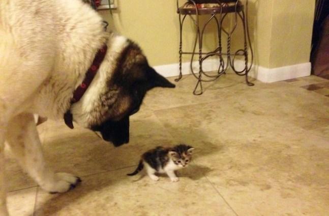 Lily tem muito cuidado com a gatinha. (Foto: Reprodução / KItty Army)