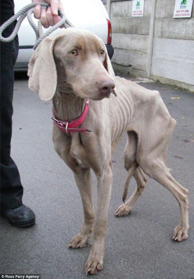 A cachorra Lola passou fome por 6 semanas. (Foto: Reprodução / Daily Mail uk)