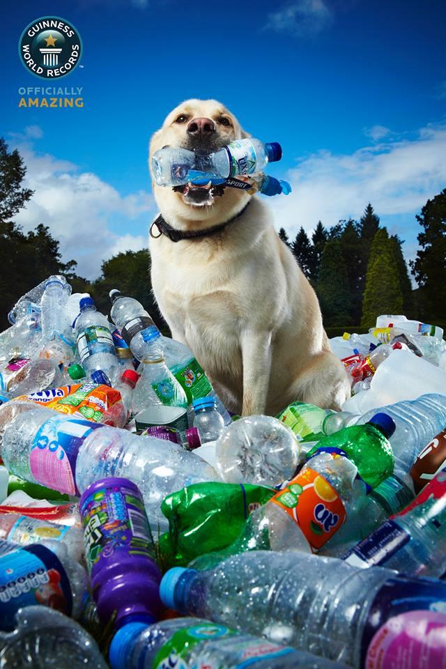 O labrador Tubby possui um recorde impressionante. (Foto: Divulgação / Facebook / Guinness World Records)